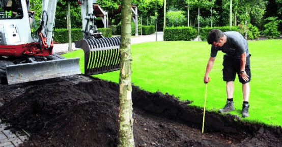 How to plant hedges
