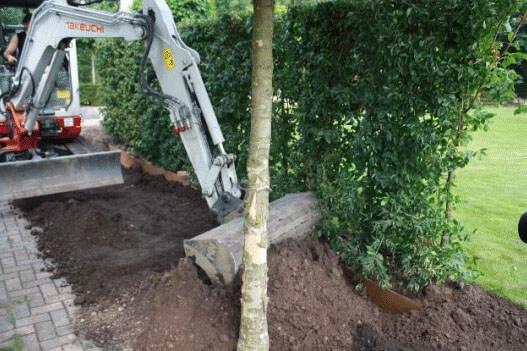 Planting hedges