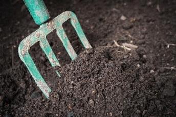 best fertilizer for hedges