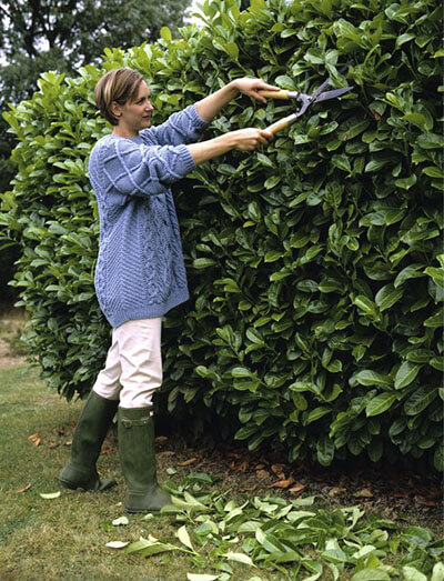 trim the hedges