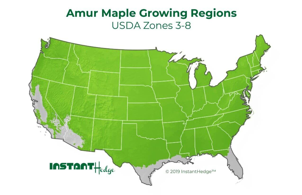 Amur Maple Zone