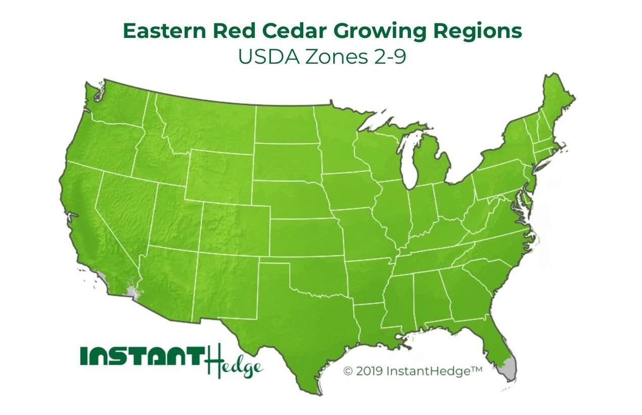 eastern red cedar growing conditions