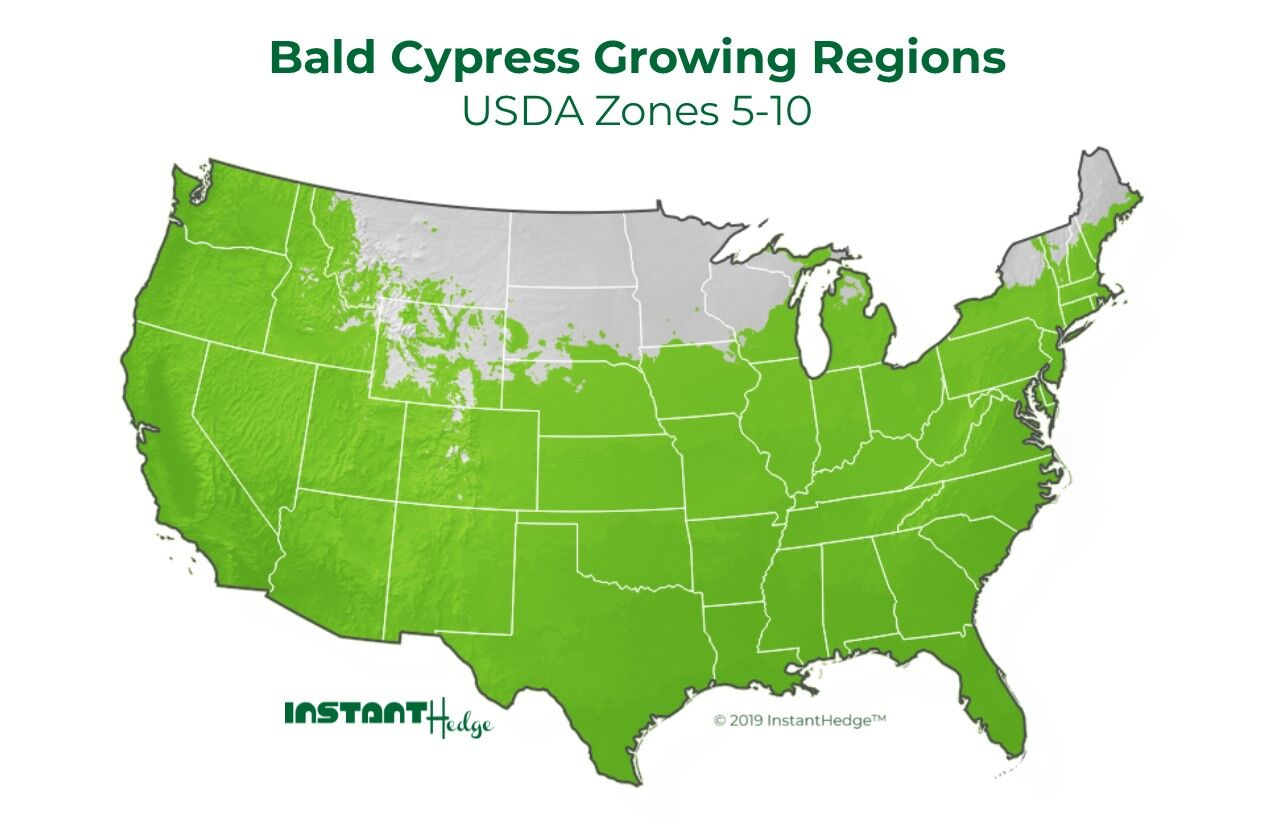 Bald Cypress Growing Zone