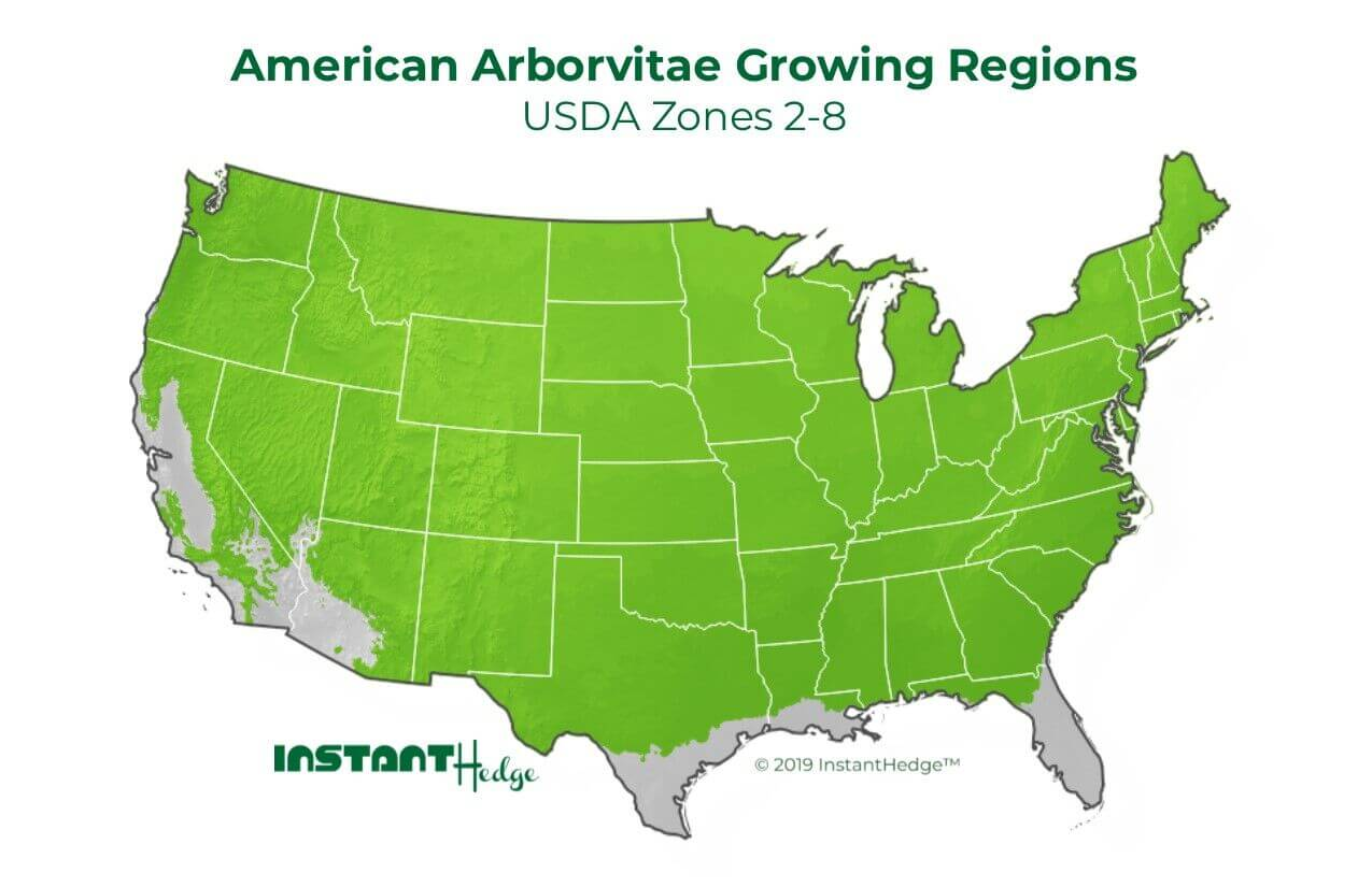 American Arborvitae Growing Regions