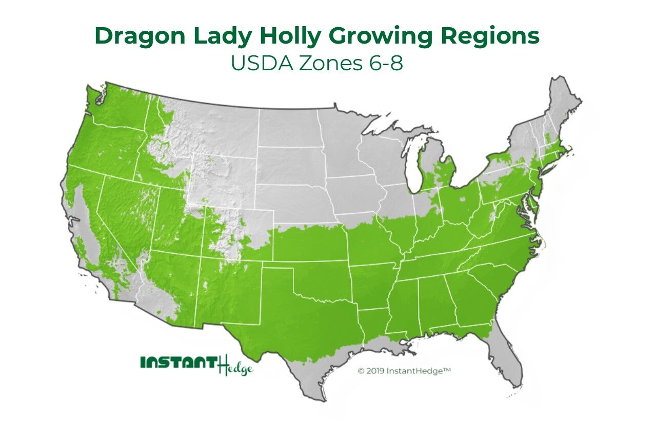 Dragon Lady Holly Growing Regions