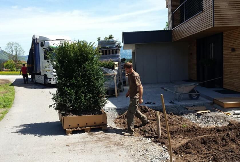 00000003-Taxus-installation-faq-planting