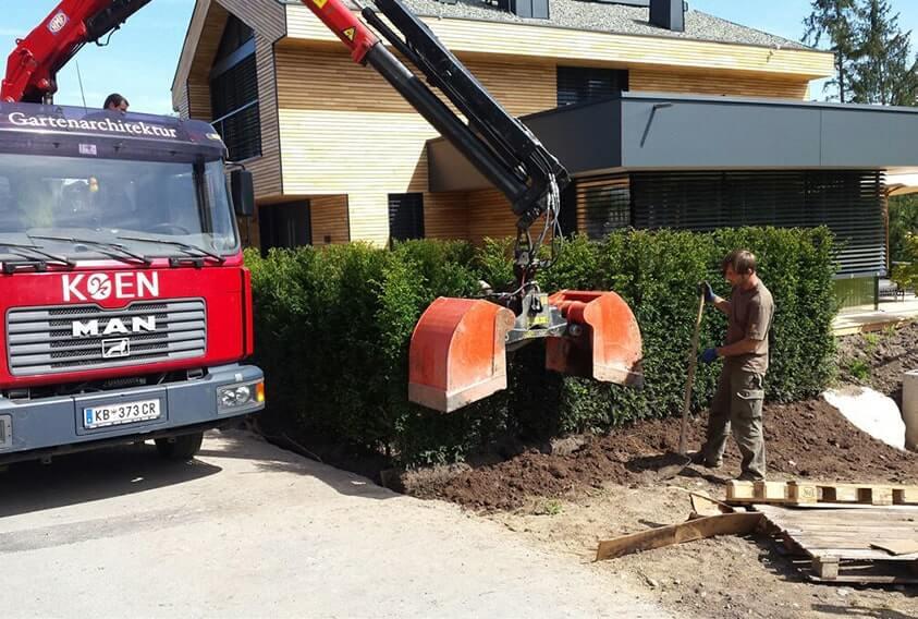 00000005-Taxus-installation-faq-planting