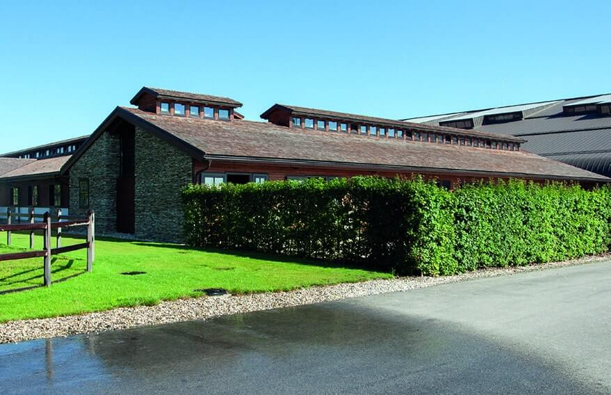 00000010-Ilex-meserveae-holly-privacy-hedge-commercial-restaurant-office