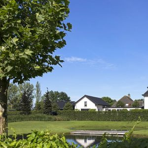 00000020-Ilex-meserveae-holly-hedge-country-estate-cottage-privacy