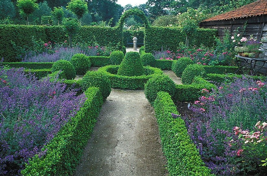 00099761-Buxus-Fagus-beech-hedge-formal-country-estate-knot-garden-summer