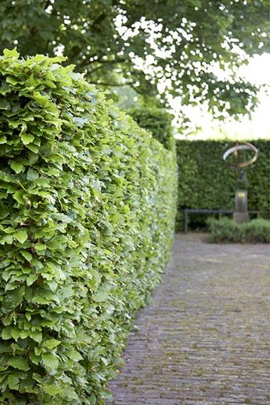 00557846-Fagus-fence-driveway-commercial-estate-path-sculpture-modern-hedge