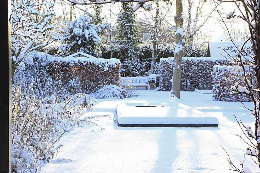 00620860-Fagus-beech-hedge-winter-leaf-retention-snow-privacy