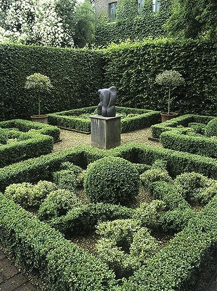 00748645-Fagus-beech-Buxus-boxwood-formal-knot-garden-sculpture