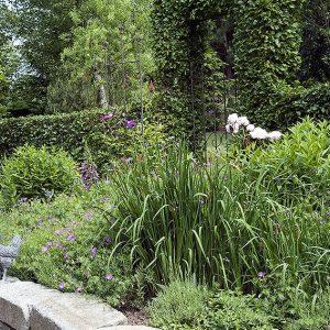 00850057-Fagus-beech-hedge-country-garden-estate-home-cottage-stone