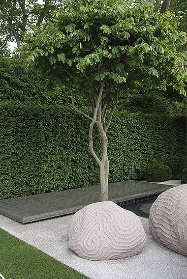 01019554-Fagus-beech-hedge-modern-contemporary-courtyard-commercial-stone-path