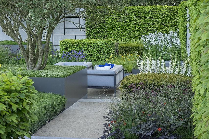 01452387-Fagus-beech-hedge-modern-courtyard-commercial-office-urban