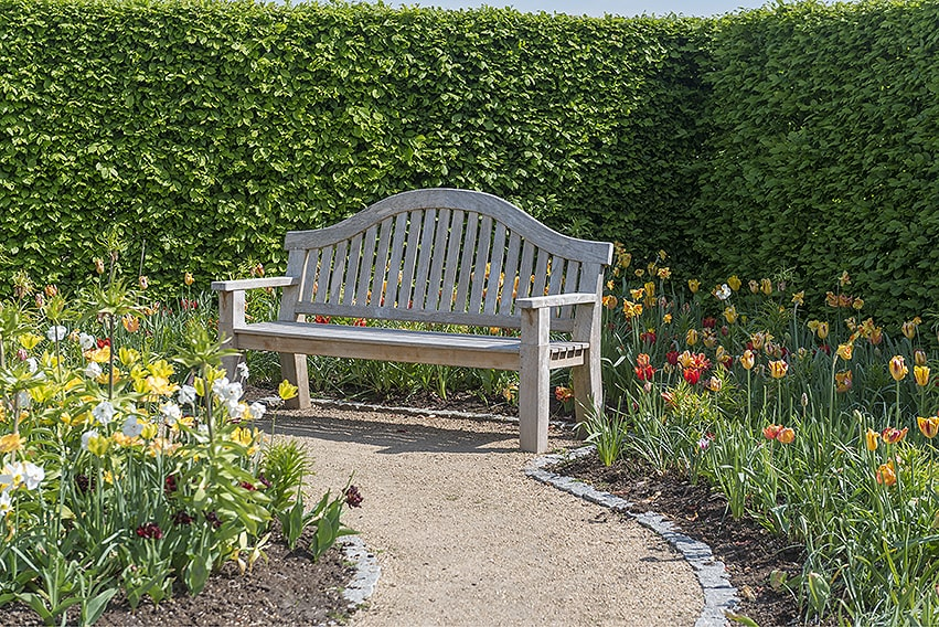01462539-Fagus-beech-hedge-park-estate-garden-spring-flowers-path-cottage-privacy