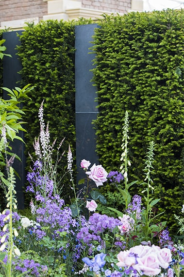 01496092-Taxus-modern-commercial-courtyard