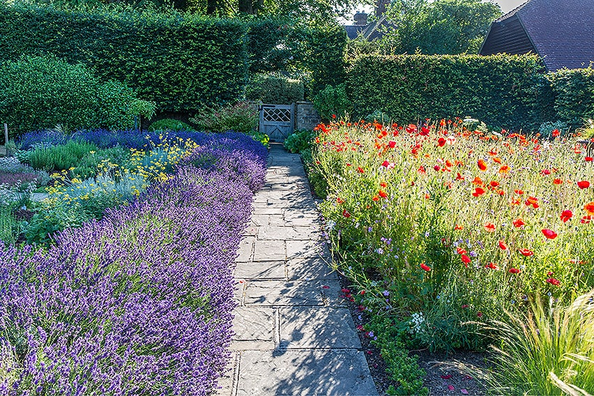 01550497-Fagus-beech-privacy-hedge-country-estate-cottage-garden-path-flowers-summer