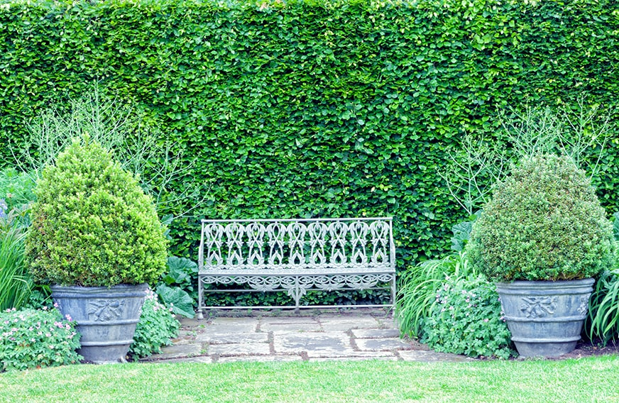 1136370632-fagus-beech-hedge-privacy-formal-garden-country-cottage-bench-peaceful