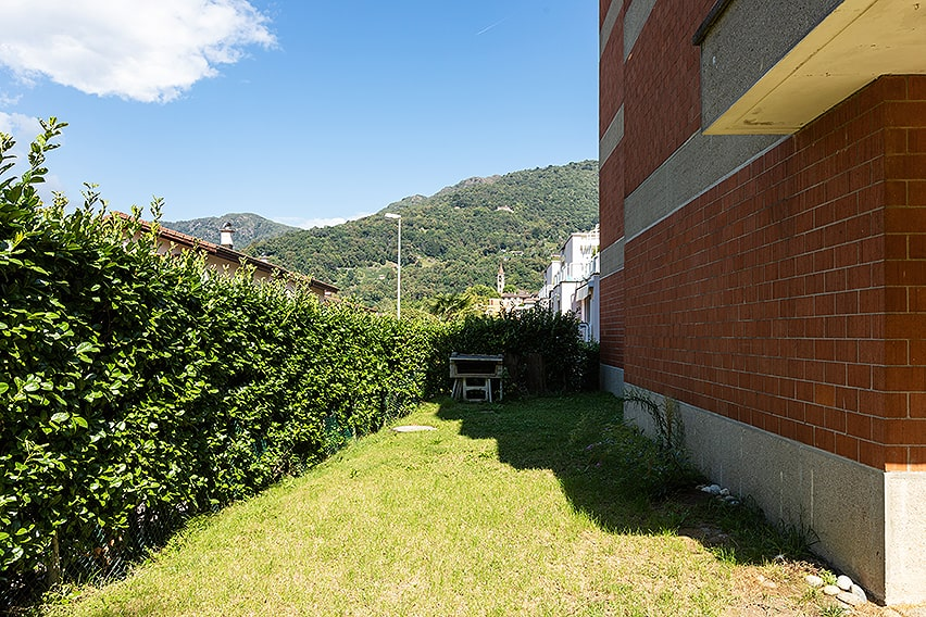 1182438694-prunus-english-cherry-laurel-privacy-hedge-yard-urban-suburban-commercial-grass-lawn-private