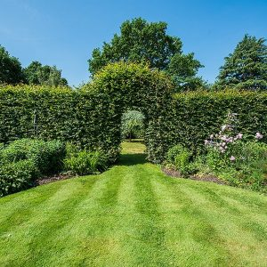 1201092013-fagus-beech-privacy-hedge-arch-country-cottage-garden-flower-summer
