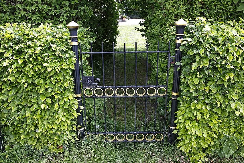 12890074-fagus-beech-hedge-secret-garden-gate-cottage-country-suburban-privacy