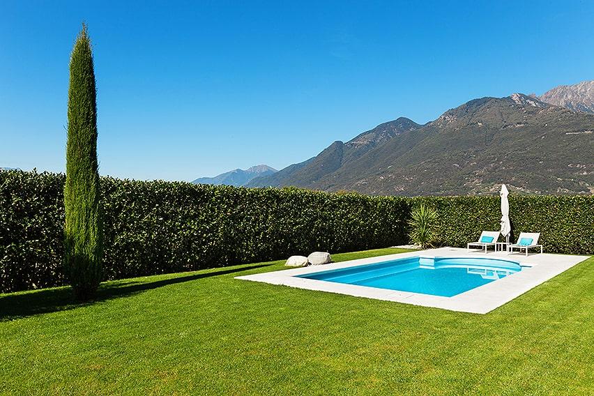 155618789-prunus-laurel-privacy-hedge-swimming-pool-country-estate-modern-contemporary-suburban-summer-wind-break-block