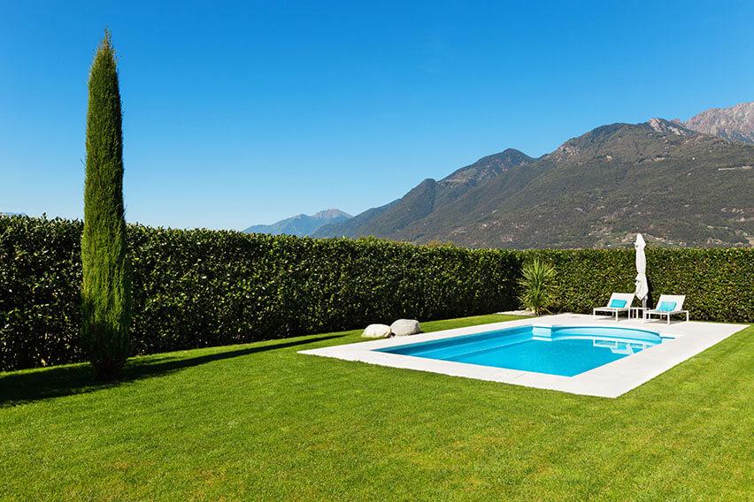 155618789-prunus-schipkaensis-schip-skip-cherry-laurel-privacy-hedge-swimming-pool-suburban-estate-modern