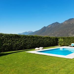 155618789-prunus-schipkaensis-schip-skip-cherry-laurel-privacy-hedge-swimming-pool-suburban-estate-modern