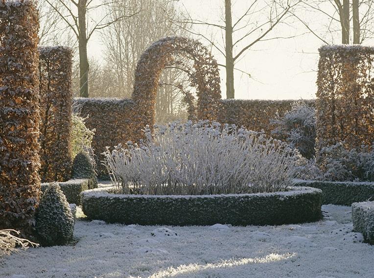 18217-Fagus-beech-yew-Buxus-boxwood-hedge-formal-estate-modern-garden-winter-snow