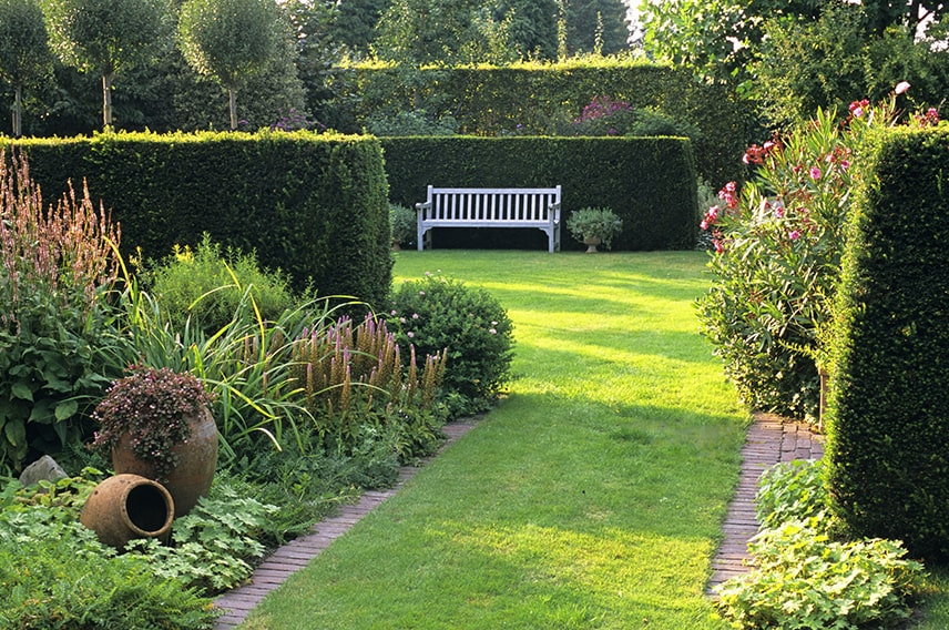 18574-Taxus-yew-hedge-country-garden-min