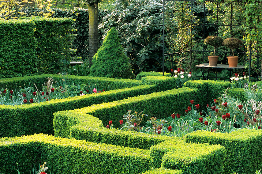 18939-Fagus-beech-Buxus-boxwood-hedge-formal-country-garden
