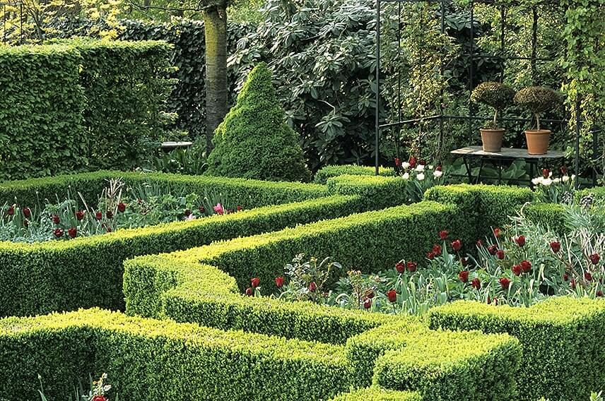 18939-Fagus-beech-Buxus-boxwood-hedge-formal-country-knot-garden