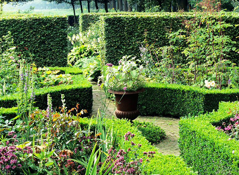19720-Buxus-boxwood-Fagus-beech-country-garden-hedge