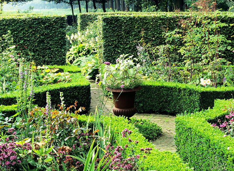 19720-Buxus-boxwood-Fagus-beech-country-garden-hedge