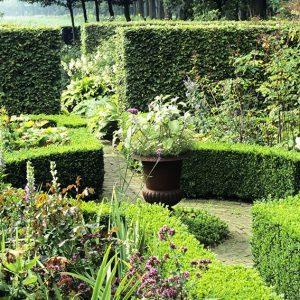 19720-Buxus-boxwood-Fagus-beech-country-knot-garden-hedge-cottage