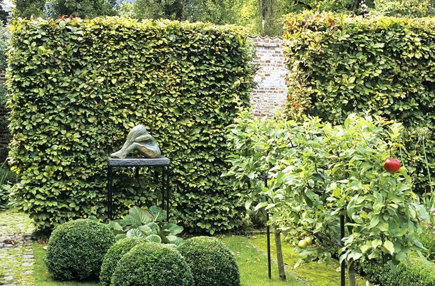 20187-Fagus-beech-modern-garden-hedge-sculpture-contemporary-landscape-design