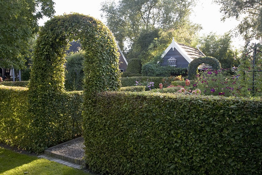 20722-Fagus-beech-hedge-formal-country-cottage-garden-privacy-arch