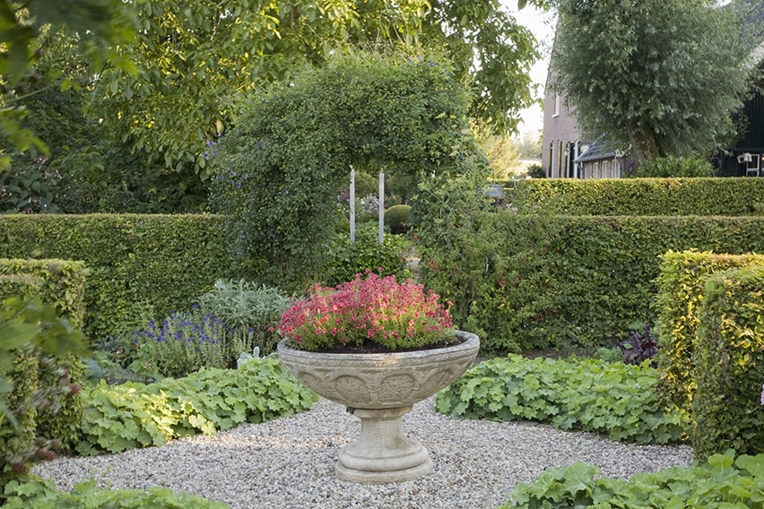 20761-Fagus-beech-hedge-formal-country-garden-privacy-cottage