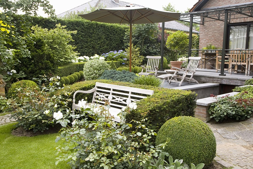 20801-Taxus-yew-Buxus-boxwood-urban-garden