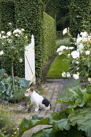 21618-Carpinus-hornbeam-country-garden-path-dog-gate-arch-cottage-flowers