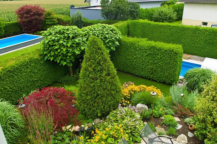 222618085-thuja-arborvitae-hedge-privacy-tall-fast-growing-swimming-pool-landscape-garden-suburban-modern-contemporary-summer-flowers