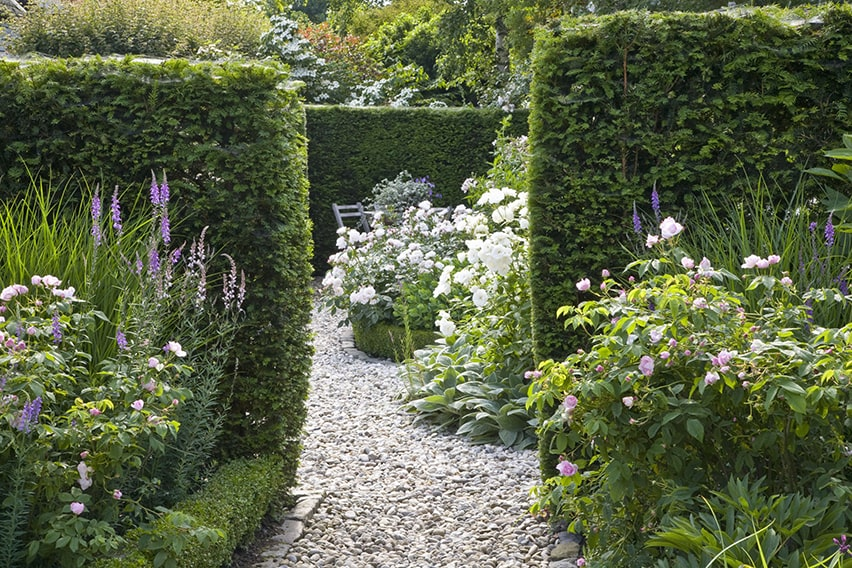 23918-Taxus-yew-country-garden