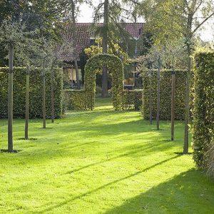 26047-Fagus-beech-hedge-formal-garden-estate-modern-landscape-design