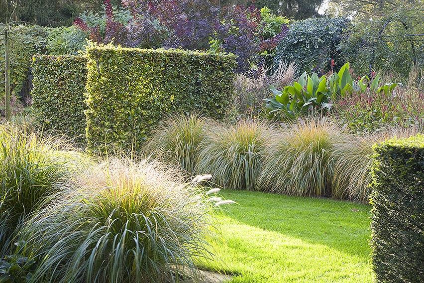26048-Fagus-Taxus-beech-yew-hedge-garden-summer-grass-modern-landscape