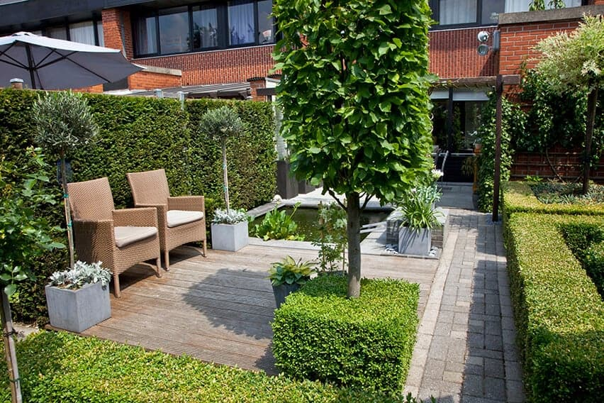 27796-Buxus-boxwood-Taxus-yew-hedge-urban-garden-trimmed-patio-courtyard-commonspace-preformed