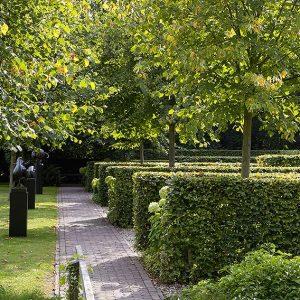 28541-fagus-beech-hedge-estate-commercial-park-garden-path-sculpture-modern-contemporary-hydrangea