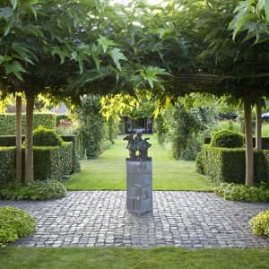 28619-Prunus-lusitanica-Portuguese-Laurel-Hedge-modern-garden