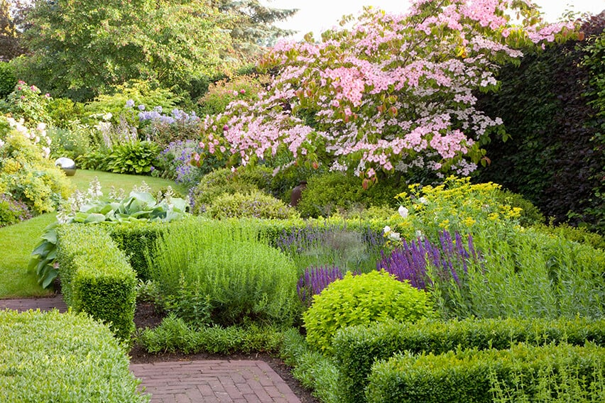 29500-Buxus-boxwood-Fagus-beech-hedge-country-garden-walkway-deciduous-flower-bed-natural-green-lawn